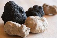 White and Black Italian Alba Truffles Premium Quality