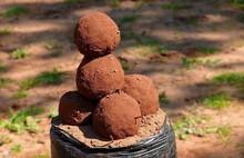 truffe rouge,red truffle