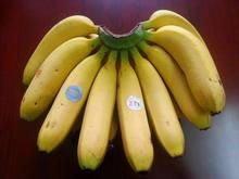 The best fruit in Viet Nam - cavendish banana / Standard: Green, sweet, 18-25 cm MDH 02 -178