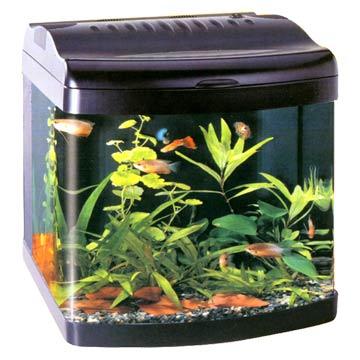 Mini Fish Tanks Aquariums