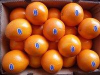 2011 Fresh Navel Orange