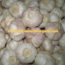 Garlic Seed 2011 New Crop /Pass G.A.P (Best Price&High Quality!!!!!!)