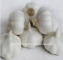 Super Pure White Garlic For Expoerting