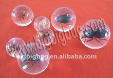Real insect bouncing ball,cool bug acrylic bouncing ball
