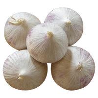 Single Clove Garlic