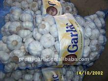 chinese fresh pure white garlic in sacks