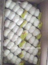dubai shangdong garlic