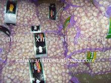 paksitan shangdong garlic