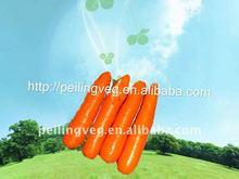 fresh carrot vegetable own farm