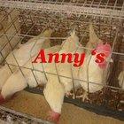 layer cage for Nigerian farm birds