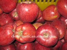 fresh apple 2011 crop