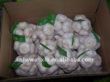 SHANGDONG CHIAN FRESH GOOD garlic