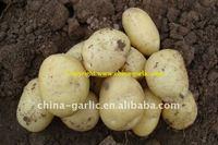 Fresh Potato Price 2011
