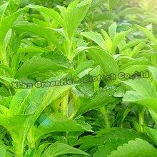 Stevia Natural Calories Free Sugar Substitute Sweetener