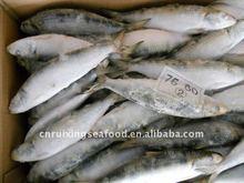 Bait Sardine Fish