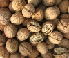 China walnuts for sale