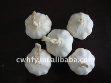 China Pure White Garlic 2011