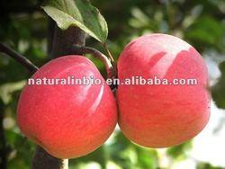 Apple Extract for Apple Pectin