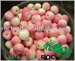 Chinese Fresh Gala Apples