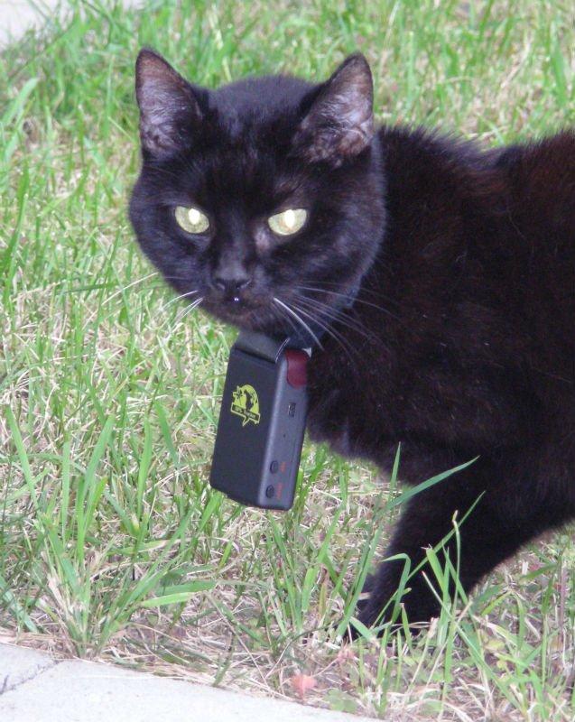 http://i00.i.aliimg.com/photo/v0/522759070/Cat_GPS_tracker_TK102_TK102_NEW_from.jpg