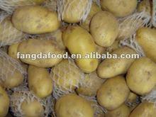 Chino amarillo de siembra de papa