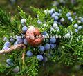 juniper berry extrato