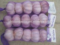 nature made garlic-TOP quality-For Algeria garlic importer