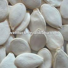 Crop 2011 Chinese snow white pumpkin seeds