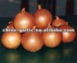 Golden Onion ( Yellow Onion)