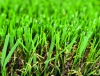 Synthetic Turf for Playgrounds , Schoolyards , sports fields