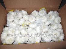 fresh garlic products