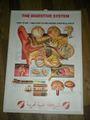 3d grafik anatomische verdauungssystem/pvc menschliche 3d medizinische poster