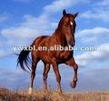 lente lenticular 3d imagem do cavalo
