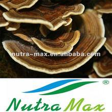 Coriolus Mushroom / Yunzhi Extract,10%~40% polysaccharides