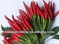 Fresco de chile rojo best seller