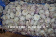 2011 crop fresh normal white garlic