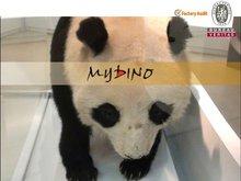 Animated Simulation Animal Model of Panda for Exhibition or Amusement