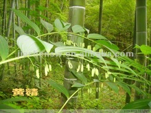 Chinese Natural Solomonseal Rhizome//Polygonatum Extract Powder 10:1 with best price