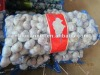 Chinese natural fresh garlic Shandong supplier