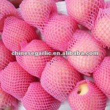 fresh sweet fuji apple provider