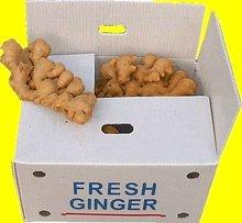 buyer of ginger- ( shandong crop) - hot sales