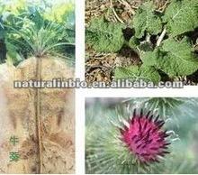 100% Natural Burdock Root Powder Extract