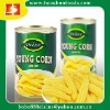 Canned Baby corn In Brine Crop Fresh