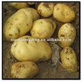 congelados de patata fresca