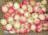 shandong yantai apple