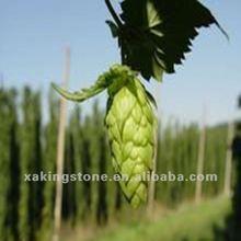 Hops flower extract natural powder Spec.:5:1,4%,5% flavonoids,4% Xanthohumol