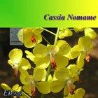 Natural Herb Cassia Nomame P.E