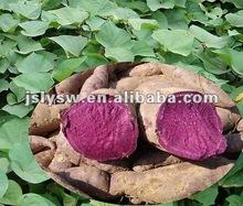 Natural Color Purple Sweet Potato Color