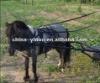 Pony horse harness