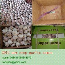crazy garlic 2012 crop china new season